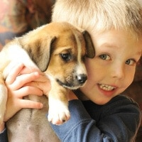 Preparing Your Home for Pets