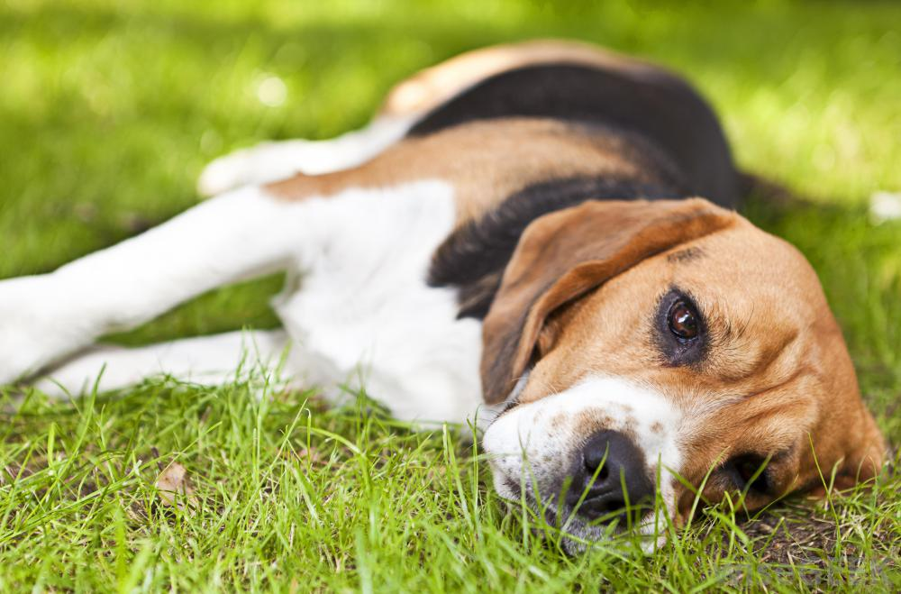 Spring is here….and so are FLEAS and TICKS